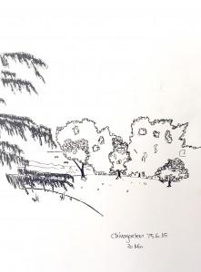 Petra Palm_Chinawiese,astrid amadeo,urban sketching, Zeichnen am Samstag Morgen in Zürich